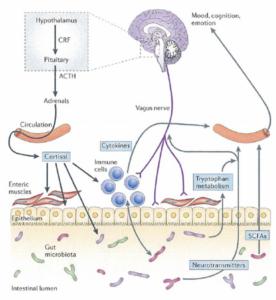 pathwaysgutmicrobes